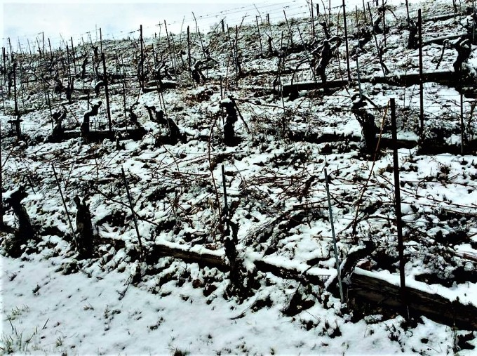 snow-vines-2
